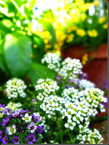flowersIMG_3738