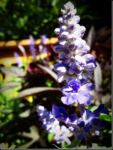 flowersIMG_3747