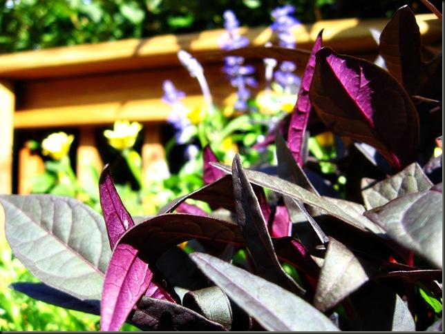 flowersIMG_3754