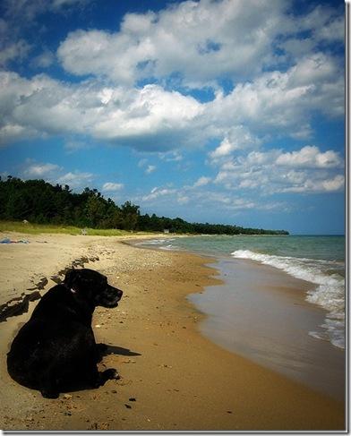 beachdogIMG_7046_thumb1