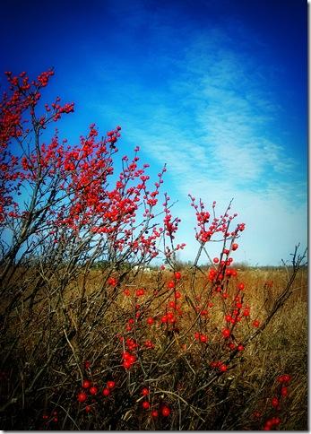 1redberrybrushIMG_9145web