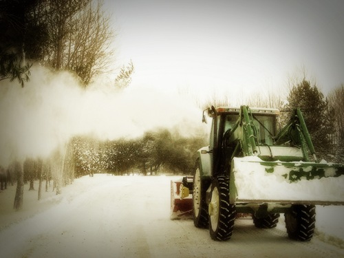 snowthrIMG_0499web