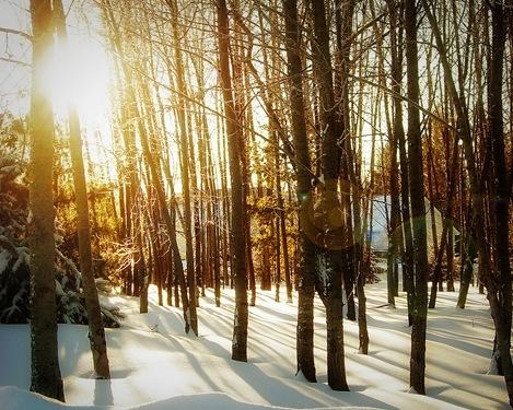 winterwoodsIMG_2431 (2)