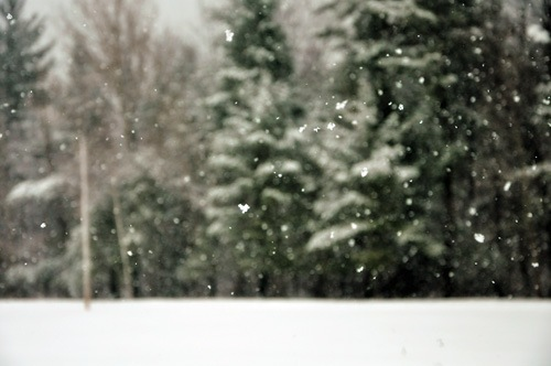 snowfallDSC_7376w