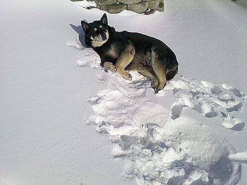 Bad Dog Max.  Baaaaad Dog.