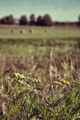 DSC_2975_Snapseed