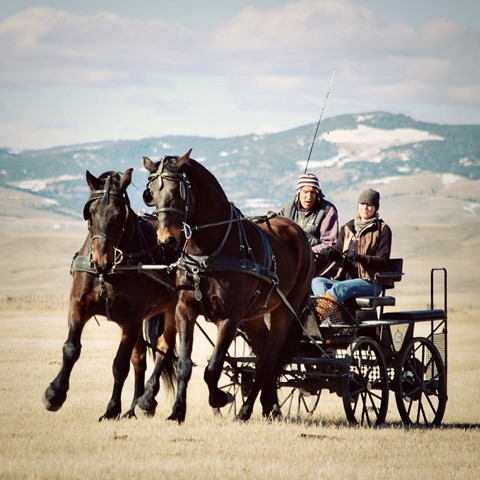 Montana - Working Horses with my Dad